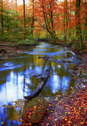 Picture of water in the forest.